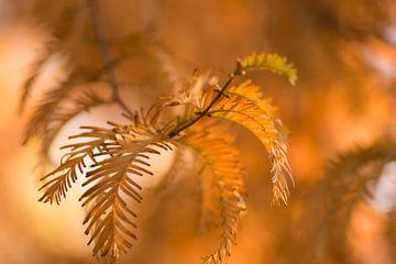 Les couleurs chaudes de l'automne sur Birgitte Bergman