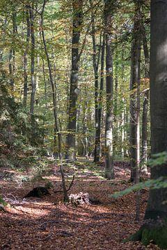 bos in het najaar