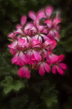 Geranium.. van ColorsofNaturePhotography Jeanet Groenewoud