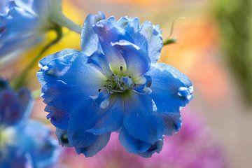 Blauwe bloem: ridderspoor van Sia Windig