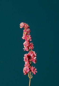 Roze Droogbloem (blauw) van michel meppelink