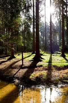 Waldlichtung von Günter Albers