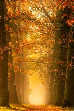 Lane in Autumn colors van Thomas Jansen