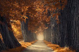 Dikke herfst bomen van