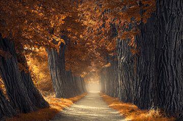 Dicke Herbstbäume von