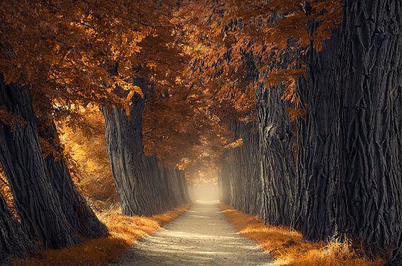 Dikke herfst bomen van Rob Visser