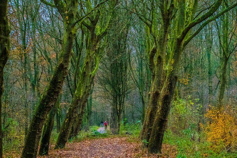 Wald von Fred Leeflang