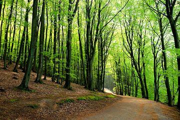 Forest  van Ostsee Bilder