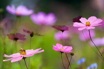 Veld vol wilde bloemen