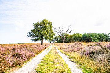 De weg tussen de paarse heide van Karin Bakker