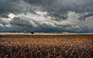 Sky Grain & Tree