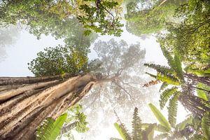 Hoge boom in Thailand van