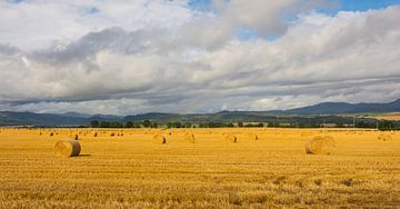 Heuballen in Schottland von Wendy Drent