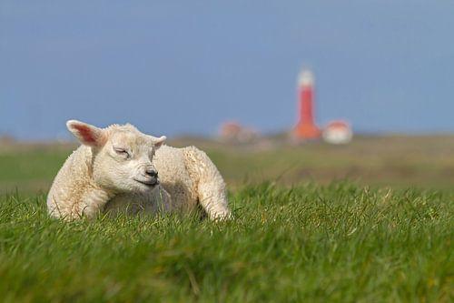 Dit is Texel! This is Texel! van