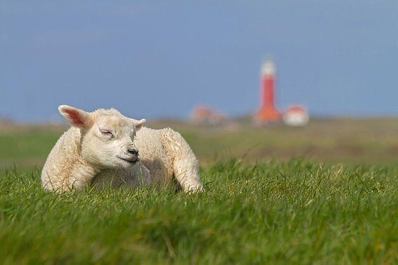 Dit is Texel! This is Texel! van Justin Sinner Pictures ( Fotograaf op Texel)