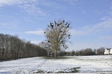 Winterlandschap Duitsland van Luke Bulters