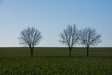 Drie boompjes van Manuel Declerck