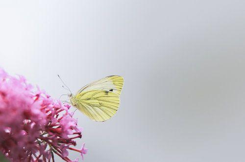 Little butterfly van Mark Zanderink