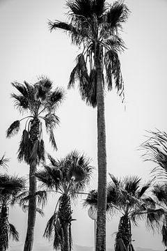 Palmen in Schwarz und Weiß von Kiki Multem