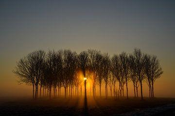 Het vroege zonlicht van Yvonne van der Meij