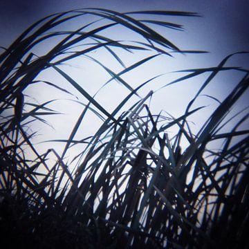 fly away 02 van poetic snapshots