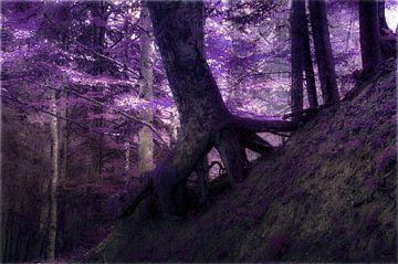 Betoverde bos van Christine Nöhmeier