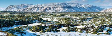 Lavafeld auf Island von Alexander Ludwig