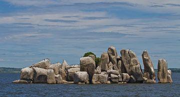 Cormorans sur une île rocheuse du lac Victoria, Tanzanie sur Peter van Dam