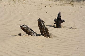 3 verschiedene Gegenstände aus Holz in den Sanddünen von Spijks PhotoGraphics