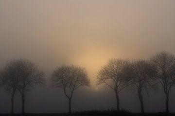 Zonsopkomst aan de Tjonger in Friesland van Rene  den Engelsman