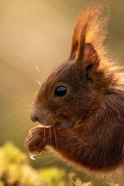 Eichhörnchen von Marjan Slaats