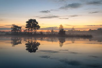 Putse Moer auf der Heather Kalmthoutse Heide in Belgien von Jos Pannekoek