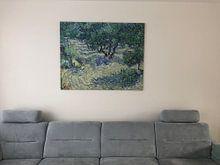 Klantfoto: Vincent van Gogh. Olijfboomgaard, op canvas
