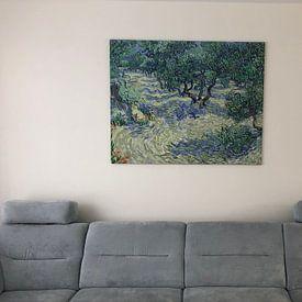 Kundenfoto: Olivenhain - Vincent van Gogh, auf leinwand