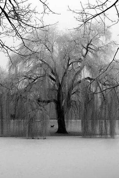 Noorderplantsoen in de Winter 5 van Ronald Hulsebos