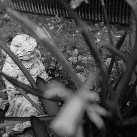 Beeld van meisje door narcisplanten heen (zwart-wit) van Daniëlle Beckers