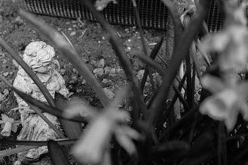Bild eines Mädchens durch Narzissenpflanzen (schwarz-weiß) von Daniëlle Beckers