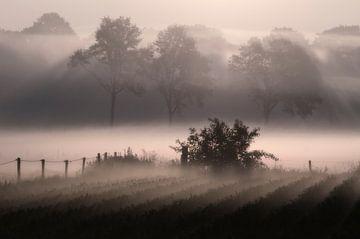 Nebligen Morgen von Wil van der Velde