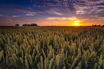 Graanvelden Groningen van Arjan Battjes