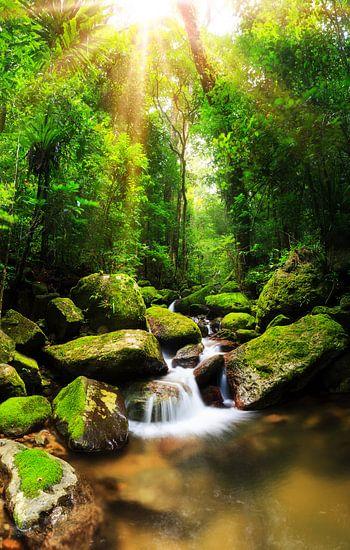Tropische regenwoud Masoala van Dennis van de Water