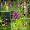 Wilde orchideeën van Ines Porada thumbnail