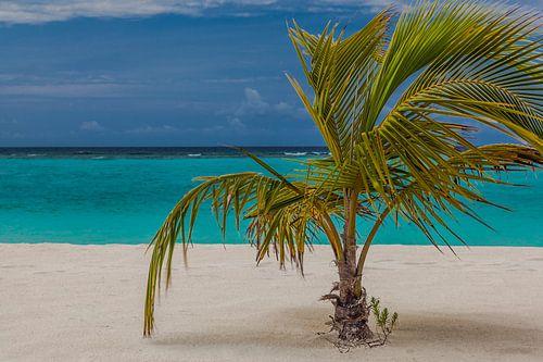 Palm Beach Island Resort auf den Malediven im Lhaviyani Atoll