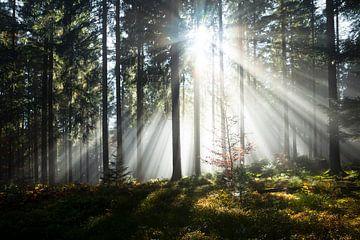Zonnestralen in het bos van Jürgen Wiesler