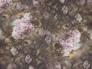 Rose Garden van