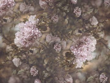 Rose Garden sur Marina de Wit