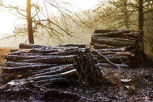 Posbank winter stammen