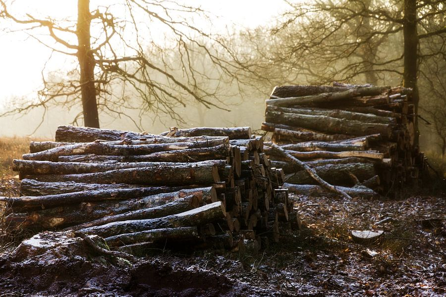 Posbank winter stammen van Dennis van de Water