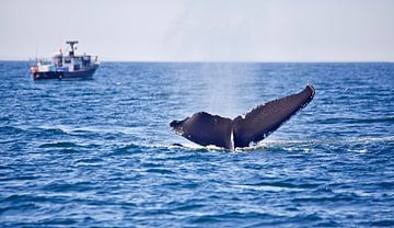 Walvis in de oceaan van Milou van den Heuvel