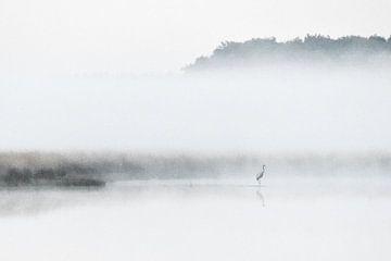 Kran im Nebel von Dieverdoatsie Fotografie