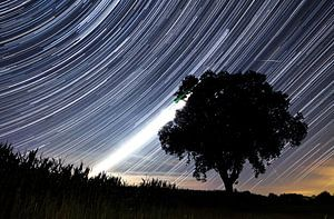 Star trails achter het silhouet van een boom van